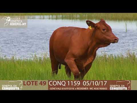 LOTE 49 CONQ 1159