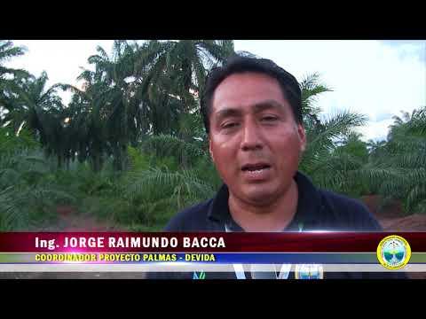 PROYECTO PALMA DE LA MPAA REALIZÓ PASANTÍA NACIONAL EN LA REGIÓN SAN MARTÍN