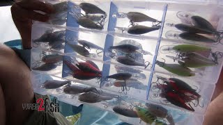 Quick and Easy Crankbait Organization Tip