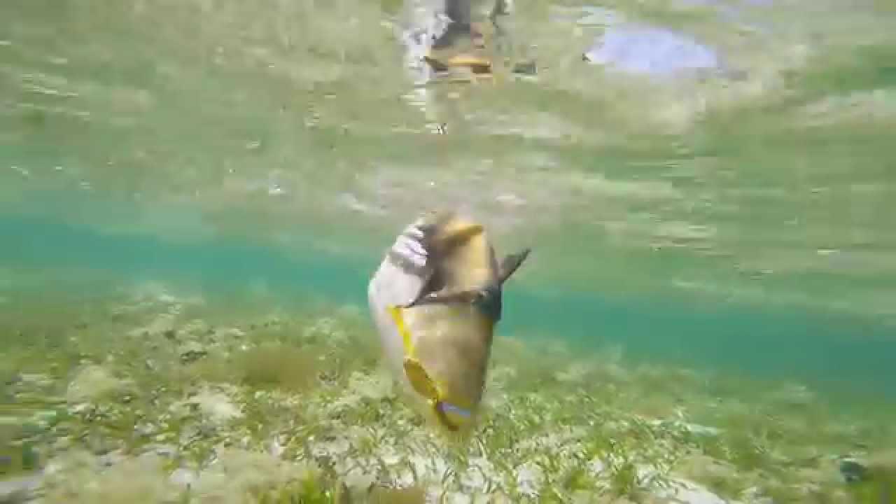 【沖縄ルアー】蛙スプーンで釣れた小物たち - YouTube