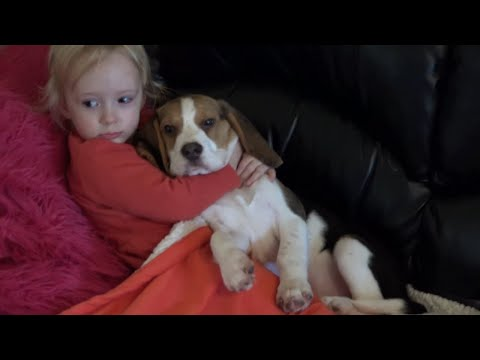 Cute Dogs Comfort a Sick Child While Watching a Movie