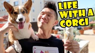 Day in the Life w/a CORGI Dog || Life After College: Ep. 600