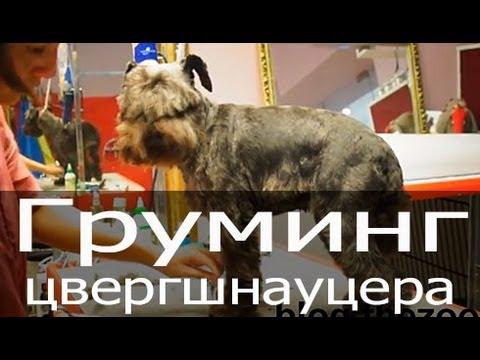 КОРОТКИЕ СТРИЖКИ И ПРИЧЕСКИ 2017, виды, фото, видео