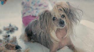 БУДКА. Одежда и стрижка для собак.(Одежда и обувь для собак. Доставка по России, ближнему зарубежью. https://vk.com/zoobutikbudka http://BUTIK-BUDKA.RU ИЗГОТОВЛЕНО:..., 2016-12-16T10:28:46.000Z)