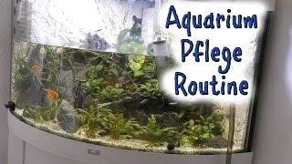 Aquarium Pflege Routine - Unsere Fische - dominik.home