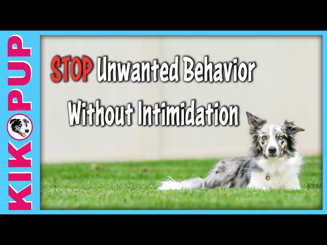 STOPPING unwanted behavior without INTIMIDATION - Dog Training