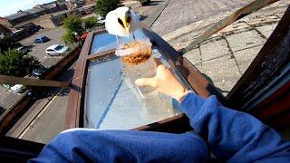 Just a Man Feeding His Pet Seagull Tasty Snackos...