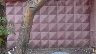 котёнок лезет по стене дома