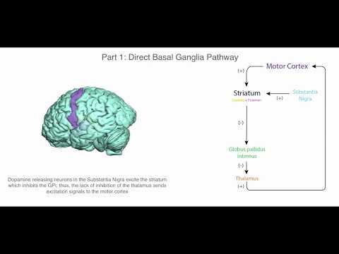 Basal Ganglia and Movement Disorders