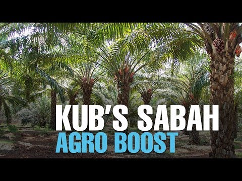 NEWS: KUB to get 31% rev from Sabah plantation