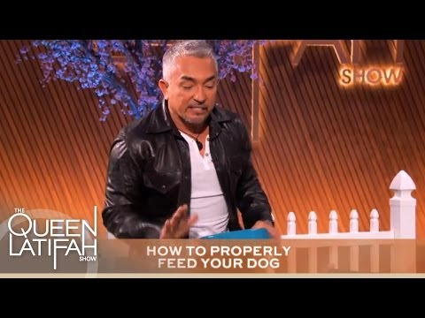 Cesar Millan's Tips Every Dog Owner Should Know