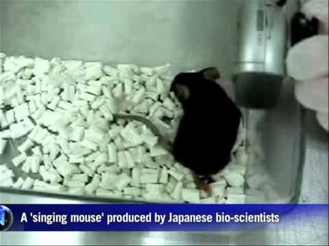 Japan Bio-scientists Produce 'singing Mouse'