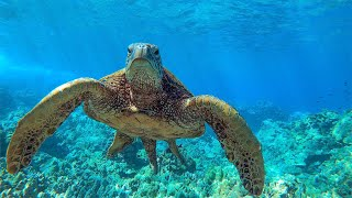 8 Hours - Relaxing Music with Sea Turtles in Hawaii with | Great Escapes