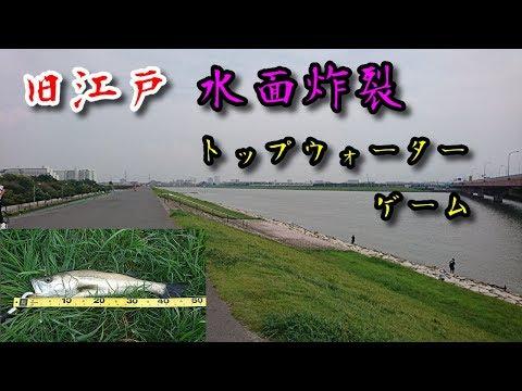 旧江戸川、水面炸裂トップウォーターゲーム2019.8.24 Tokyo  Seabass  game