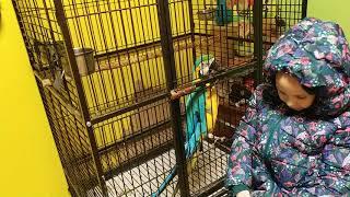 Попугай ара оценивает новую курточку Алисы