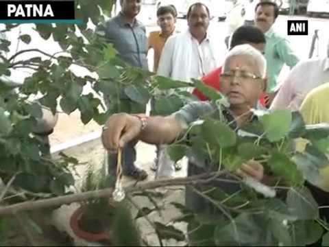 Watch: Lalu Yadav ties rakhi to a 'peepal tree' on Raksha Bandhan - ANI News