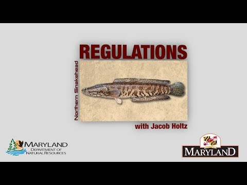 Northern Snakehead - Regulations - Maryland Department Of Natural Resources