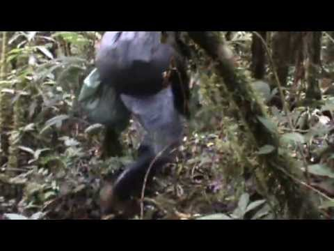 10 minutes of walking in the jungle in Sangay National Park, Ecuador