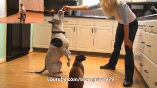 How To Train A Dog And A Cat To Stand Up!