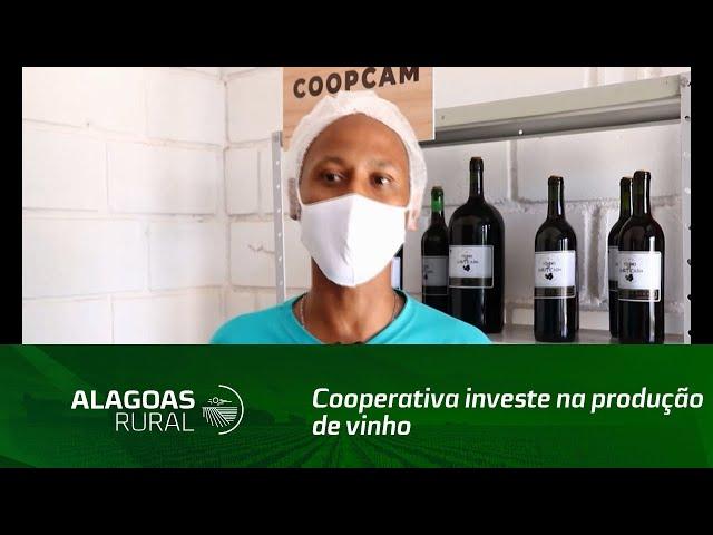 Cooperativa investe na produção de vinho de jabuticaba