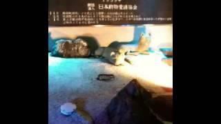 東京タワーの下で撮影。 iPhone3GSを手に入れた2009.6.29に。 縦長動画...