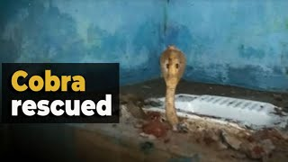 Odisha: 4-ft-long cobra rescued from toilet in Cuttack