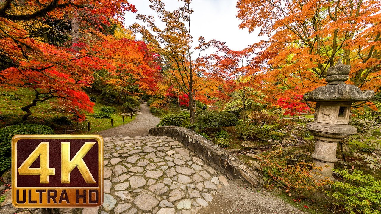 Japanese Garden 4k Resolution 1 Hour Nature Sound For Relaxation Autumn