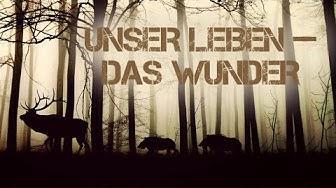 Unser Leben das Wunder (Tierfilm für Kinder, Tier-Doku, Kinderfilm, deutsch) kostenlose Kinderfilme