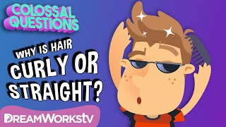 What Makes Hair Curly or Straight? | COLOSSAL QUESTIONS