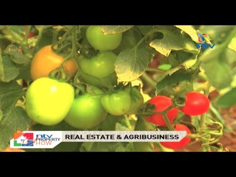NTV Property Show - Real Estate and Agribusiness