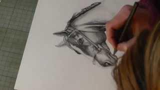 Dominika Baum malt ein Pferdekopf mit Graphit