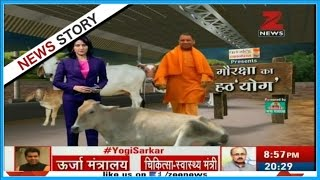 "Gau Raksha | Why Yogi Adityanath is fond of serving ""Cows"" ?"