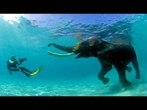 13 Most Unexpected Animal Swimmers