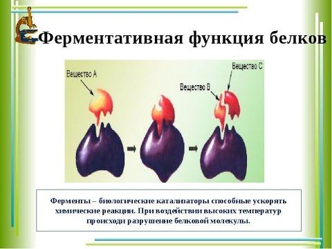 БЕЛОК :Ферментативная Функция