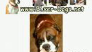 Boxer Dog Puppy Training - Positive Re-enforcement