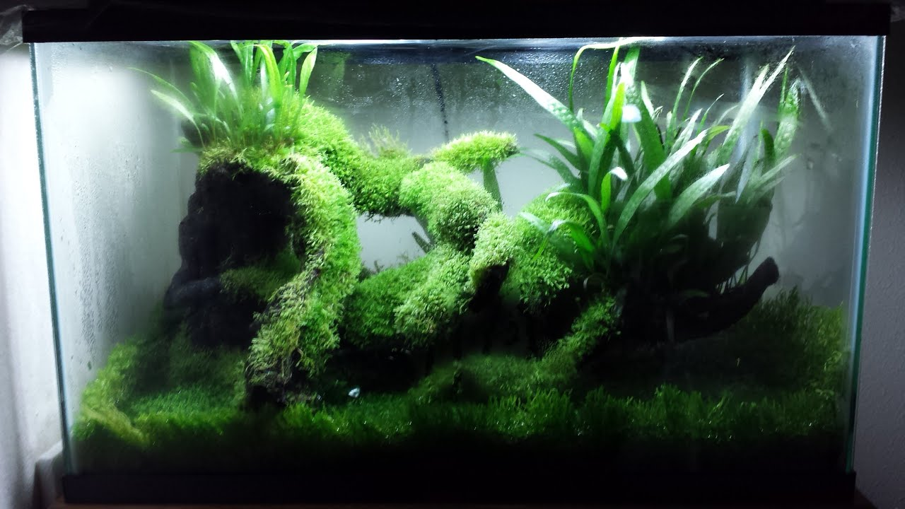 Waterless aquarium or terrarium youtube for Fish tank terrarium