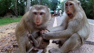 What monkey do with poor baby, Real life of newborn baby