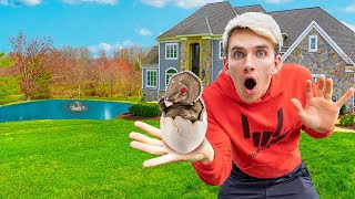 POND MONSTER EGG FOUND while EXPLORING ORIGINAL SHARER FAM HOUSE?!
