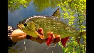 Рыбалка на поплавочки. Шикарный клев. Плотва язь карась.