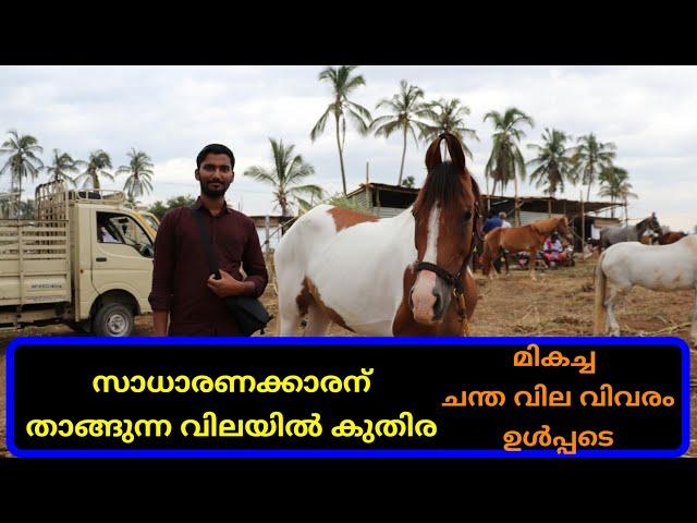 1000കണക്കിന് കുതിര കുറഞ്ഞ വിലയ്ക്ക് കിട്ടുന്ന ചന്ത|anthiyur horse fair 2019