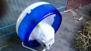 slow hamster 4