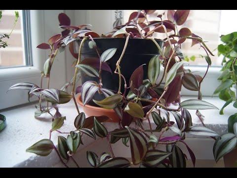 Рододендрон посадка и уход, фото рододендрона, выращивание
