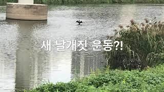 새,운동?!