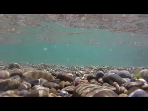 Catching an eel in lake Taupo