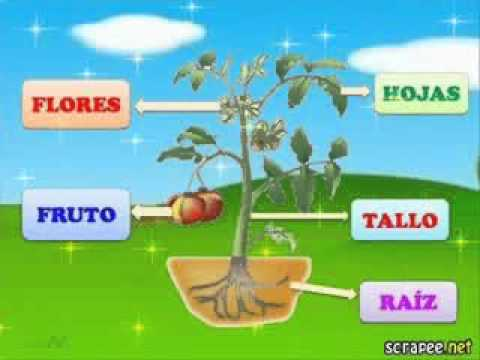 Partes de la youtube for Cuales son las partes de un arbol