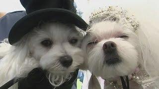 Woofstock: собачий фестиваль в Лос-Анджелесе (новости)