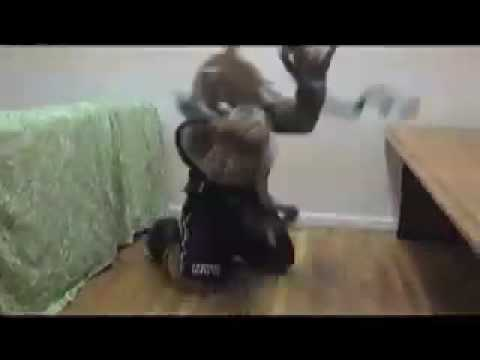 NYU Bobcat - YouTube