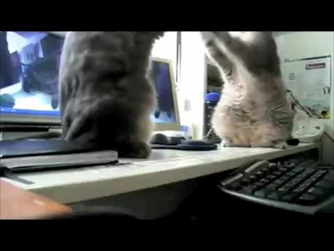 Backe Backe Kuchen Englisch Katzen Idition Youtube