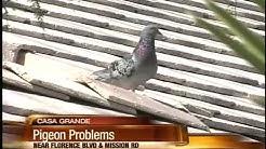 Birds becoming dangerous in Casa Grande