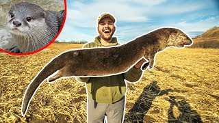 I TRAPPED a GIANT OTTER at My FARM!!! (Rare Catch)
